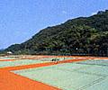 sp_m_tennis.jpg