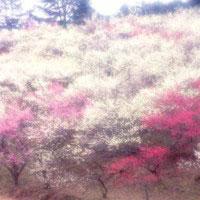 shuzenji-bairin041.jpg