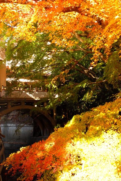 城下橋と大楓_0011.jpg