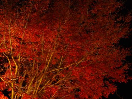 夜の紅葉_0094.jpg