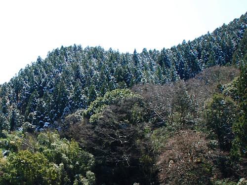 春の雪_2780.jpg