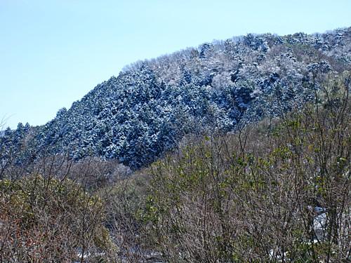 春の雪_2791.jpg