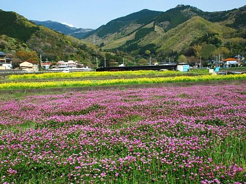 菜の花舞台_0128.jpg