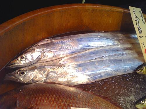 太刀魚-00114.jpg