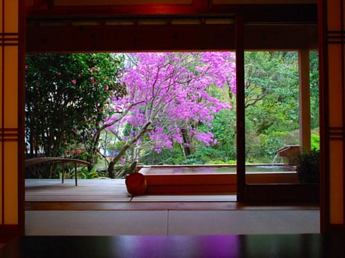 0061-春の広々露天.jpg