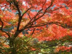 amagi-kouyou-DSCN0019.jpg