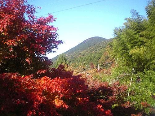 秋の吉奈-00049.jpg