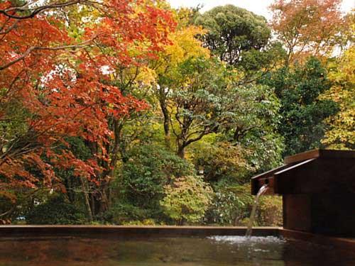 秋・楓の間_0520.jpg