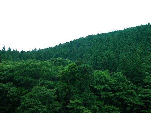 吉奈・初夏の山-3635.jpg
