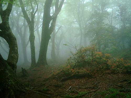 天城山-2 123.jpg