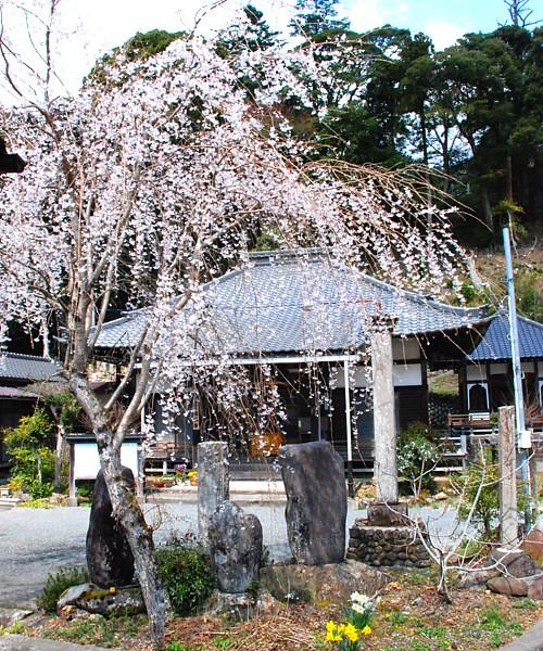 桜・善名寺_0035-2.jpg
