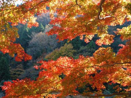 aki-kouyou-0195.jpg