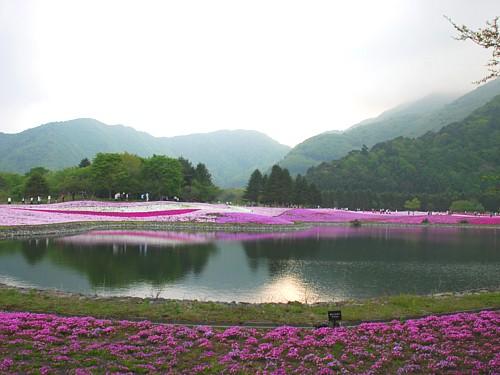 芝桜_0089.jpg