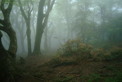 天城山・霧2 123