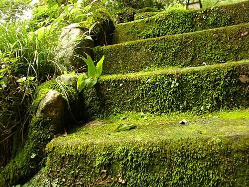 150-庭園
