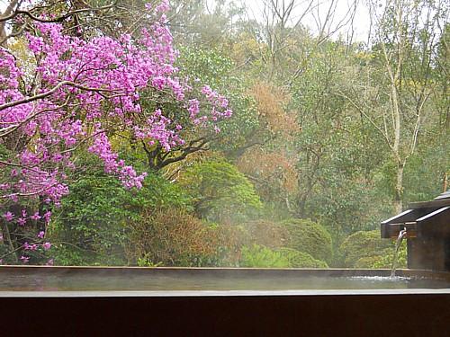 7702-春・庭園