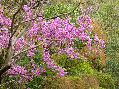7716-春・庭園