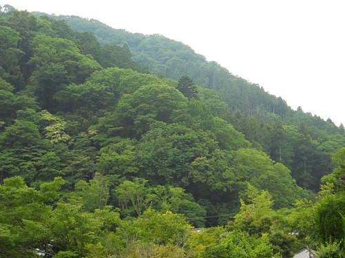 8018-吉奈の山